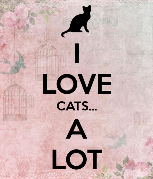 i-love-cats-a-lot.png